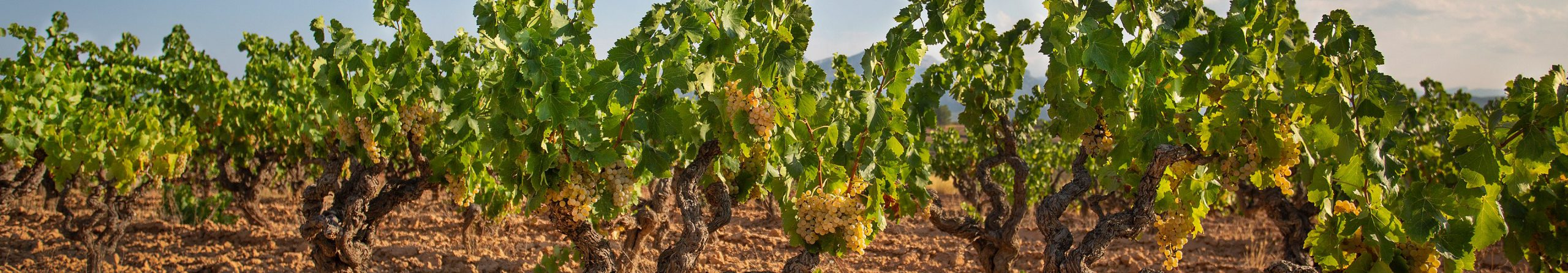 Sant Josep vins
