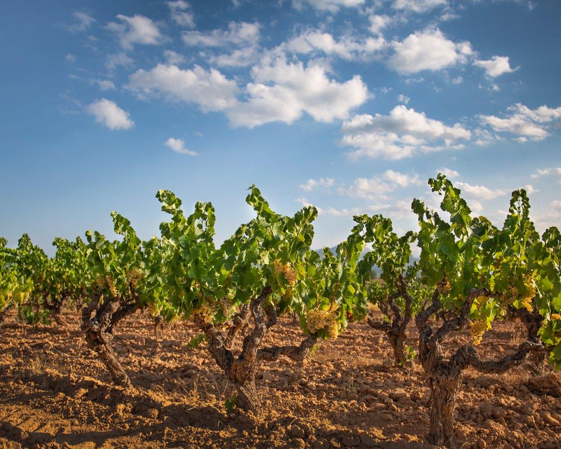 Sant Josep vins 2