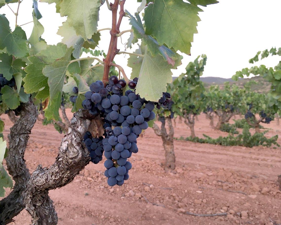 Sant Josep vins 4